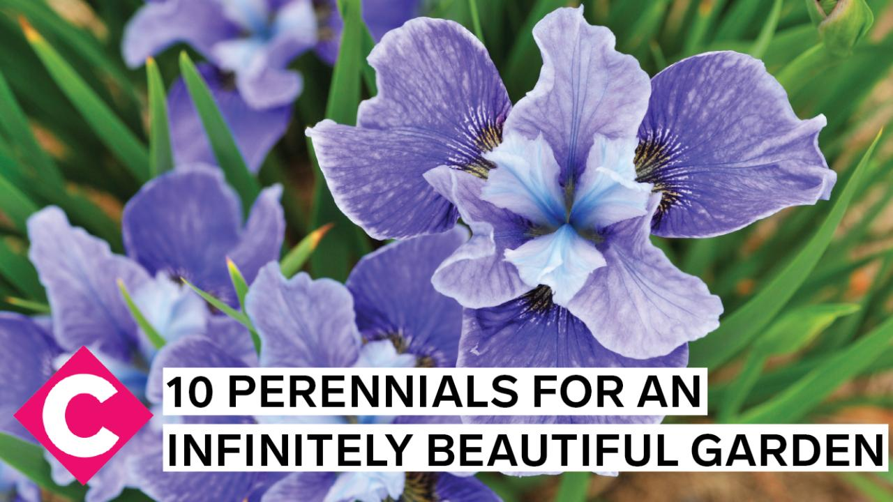 10 most beautiful perennial flowers to give